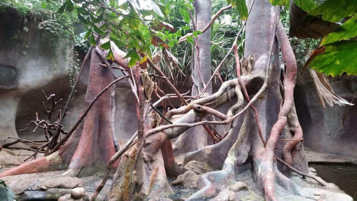Džiunglų namas Prahos zoologijos sode