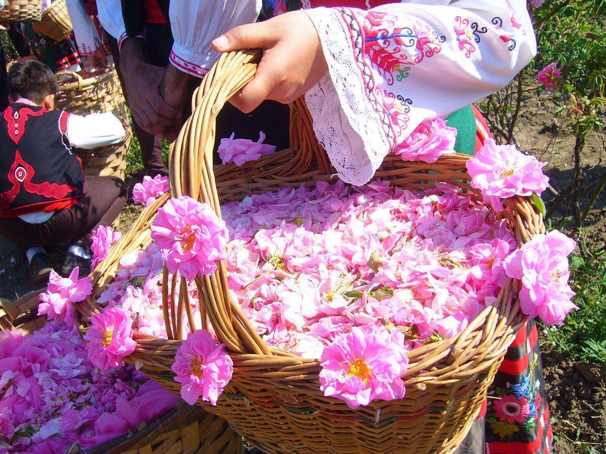 Bulgarijos rožės garsios visame pasaulyje
