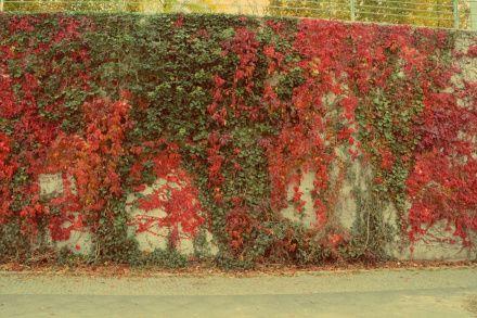 Berlyno siena rudeniškai