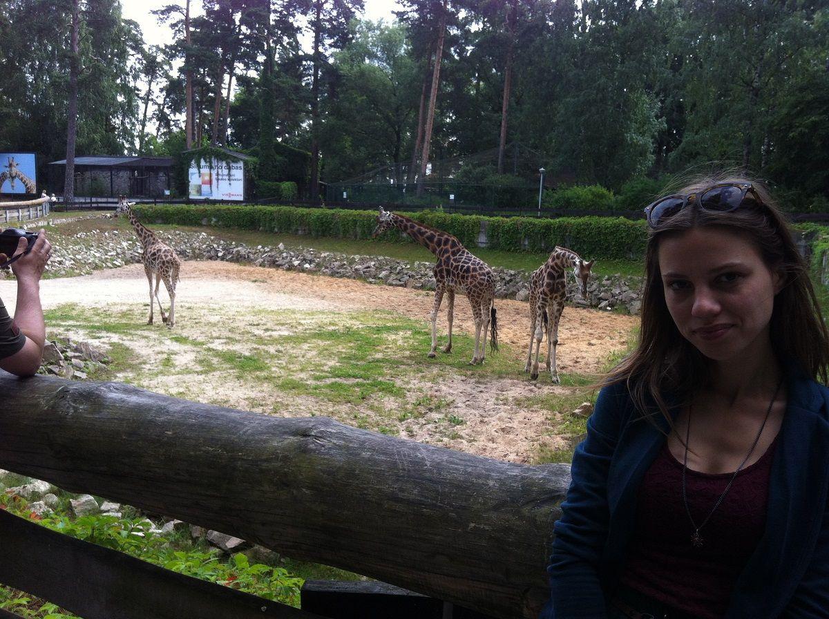 Draugės žirafos
