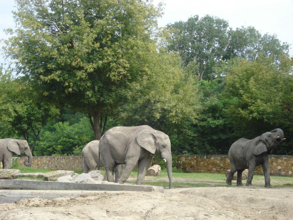 Varšuvos Zoologijos sode